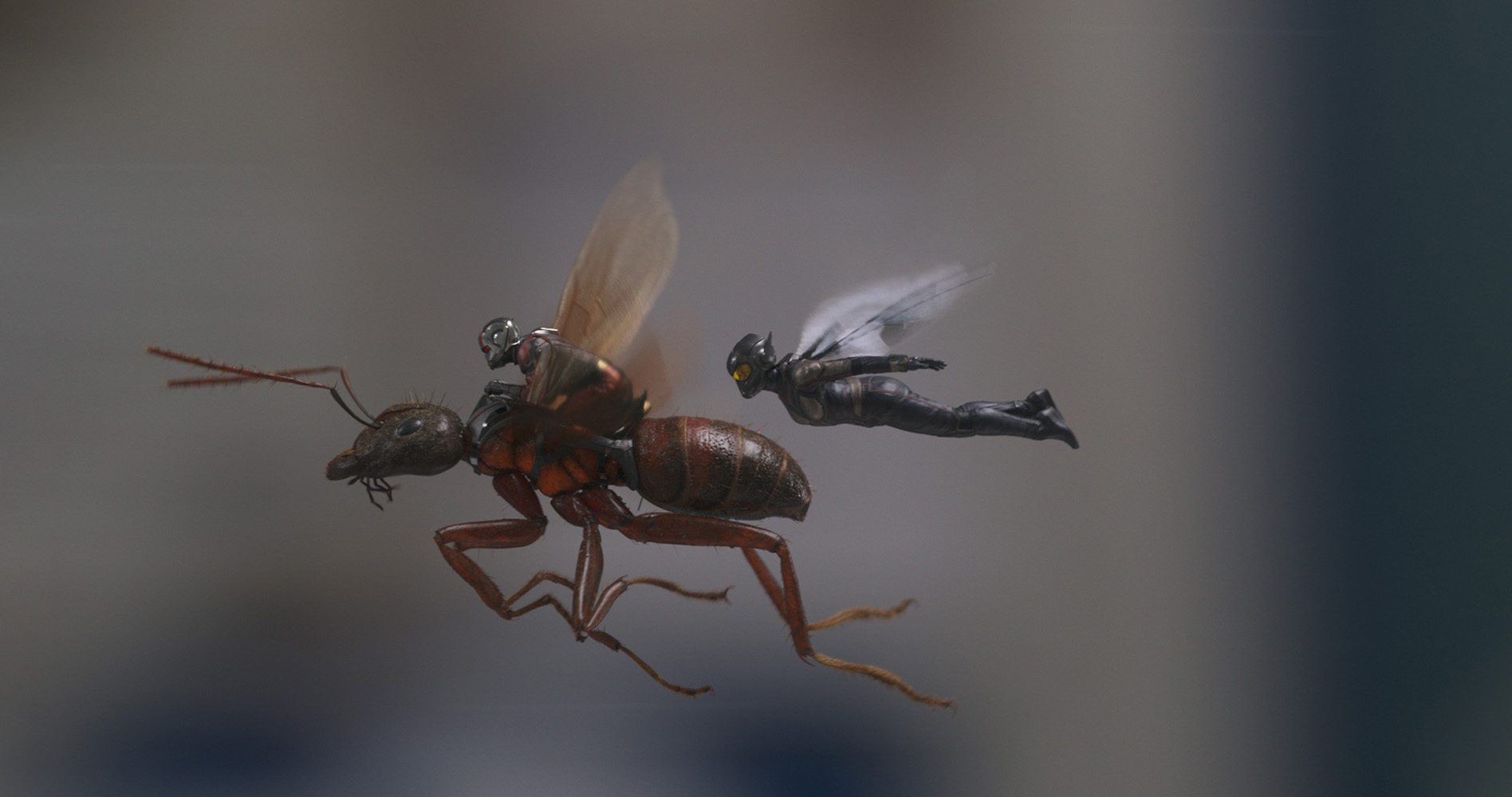 Ant-Man and The Wasp flying together